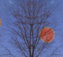 Planet Grapefruit Sticker