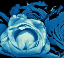 Cyanotype roses Sticker
