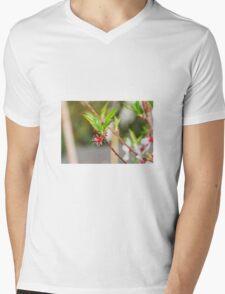 Almond Flowers After Petal Drop Mens V-Neck T-Shirt