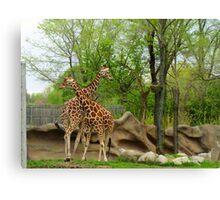 You Bet Giraffe! Canvas Print