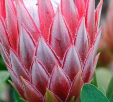 Protea Cynaroides Flower Sticker