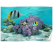 Purple coral underwater with tropical fish Poster