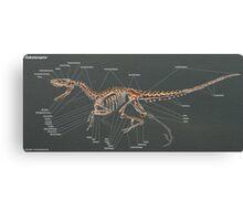 Dakotaraptor Skeleton Study  Canvas Print