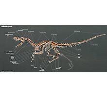 Dakotaraptor Skeleton Study  Photographic Print