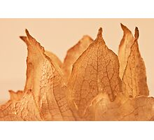 Lavatera Seed Macro  Photographic Print
