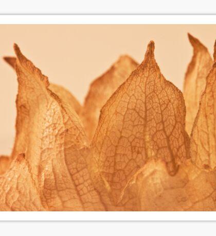 Lavatera Seed Macro  Sticker