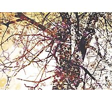 Hope modern tree flower floral nature painting art design Photographic Print