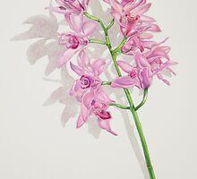 Cymbidium Orchids by joeyartist