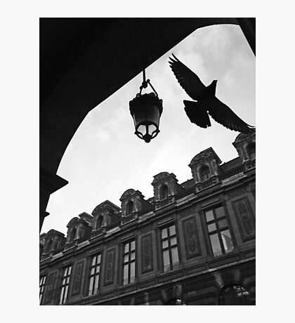 That moment of pigeon bird flying in paris Photographic Print