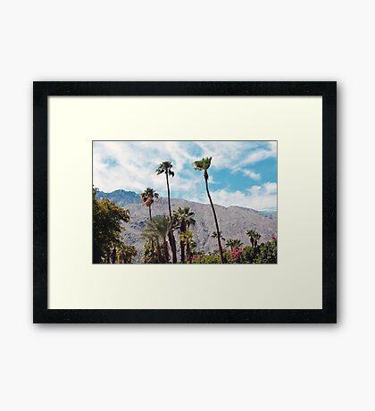 Palm Trees (Palm Springs) Framed Print