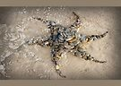 Sea Star Sculpture Wategos Beach Byron Bay by © Karin Taylor