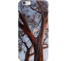 Gum at Coolgardie Sunrise with Moon iPhone Case/Skin