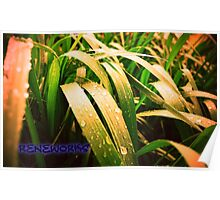 ReneWorks Grass Abstract Poster