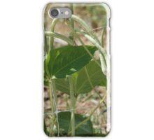 Yardlong Beans on Vine iPhone Case/Skin