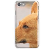 Stray Brown Dog on a Street iPhone Case/Skin