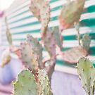 cactus in the evening by Jessica  Lia