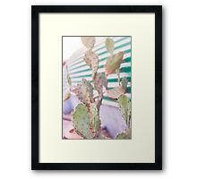 cactus in the evening Framed Print
