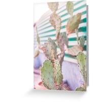 cactus in the evening Greeting Card