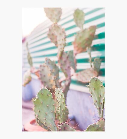 cactus in the evening Photographic Print