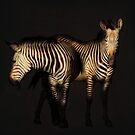 zebras on black by Luisa Fumi