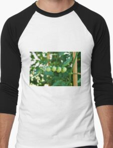 Green Tomatoes on the Vine Men's Baseball ¾ T-Shirt