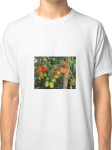 Date Tomatoes Ripening on Vine Classic T-Shirt