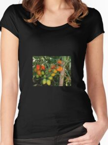 Date Tomatoes Ripening on Vine Women's Fitted Scoop T-Shirt