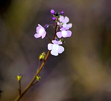 Morning Bloom by Karl F Davis