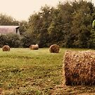 """Bales Along the Tree line""... prints and products by © Bob Hall"