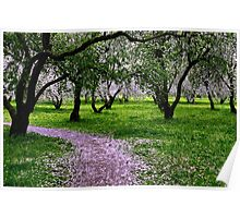Apple Garden May Blossoming  Poster