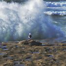 No Fear ~ Seagull Watching The Waves ~ Sunset Cliffs, California ~ USA by Marie Sharp
