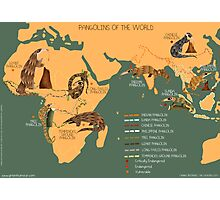 The Pangolin Map of the World Photographic Print