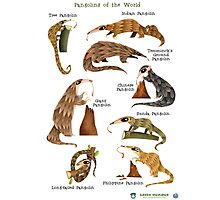 Pangolins of the World Photographic Print