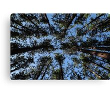 Brown Trees Green Leaves Canvas Print