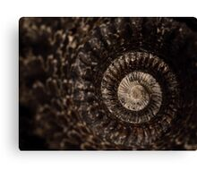 whorls of ammonite Canvas Print