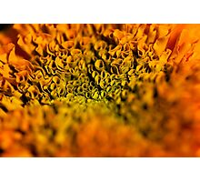 orange crysanthemum Photographic Print