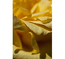 rose textures Photographic Print