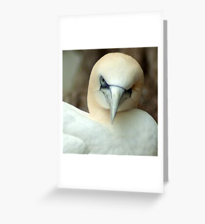 One Eyed Bird Wink  Greeting Card