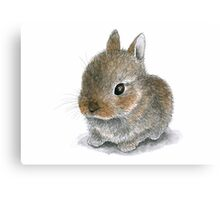 Rabbit 61 Cute Bunny Canvas Print