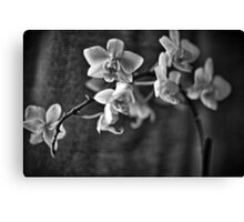 Black & White Orchid Canvas Print