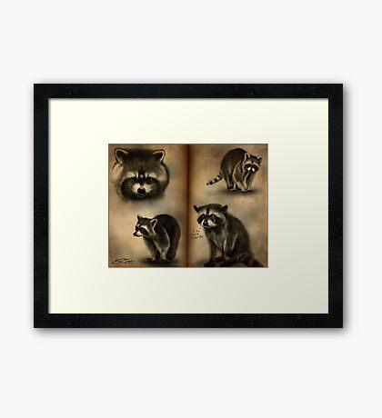 Commander Raccoon Framed Print