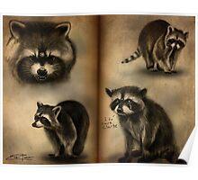 Commander Raccoon Poster