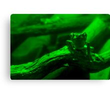 Frog #4 Canvas Print