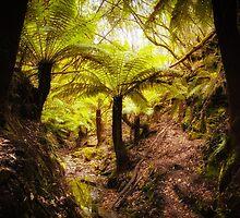 Tasmanian Ferns by Maciej Nadstazik