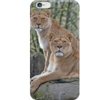 Stare Down African Lions iPhone Case/Skin