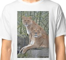 Stare Down African Lions Classic T-Shirt