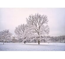 Raising With The Winterfrost Photographic Print