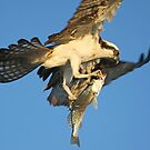 Great Catch!! by jozi1