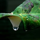 Cuckoo Spit and Raindrop by Photography  by Mathilde