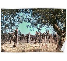 Olives and vines. Poster